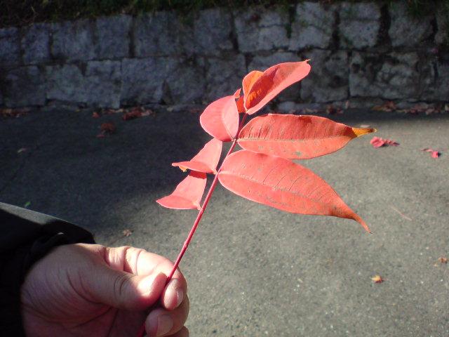 またまた紅葉♪