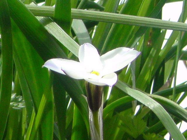 春の花が 今日も咲いていました。