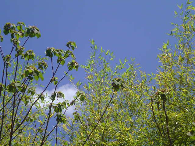 新緑の輝きに魅せられてます。 地球さんありがとう筠