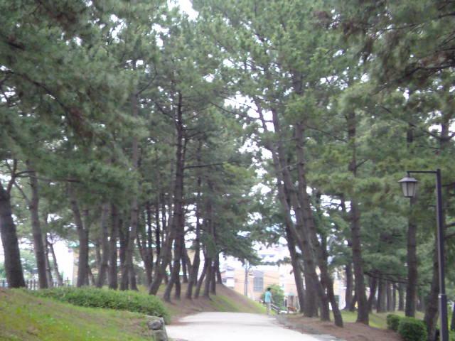 夫と長崎街道の松林でくつろぎました♪