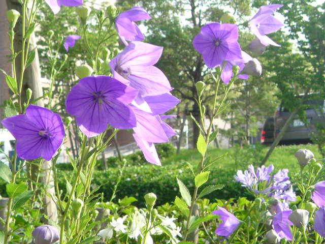 久しぶりの晴れ間に 花たちも喜んでるようでした。