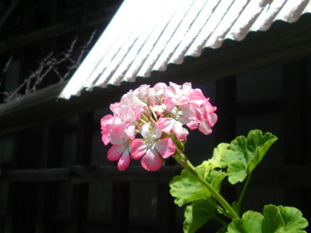 何処に居ても太陽が 輝いているから花は美しく咲く。