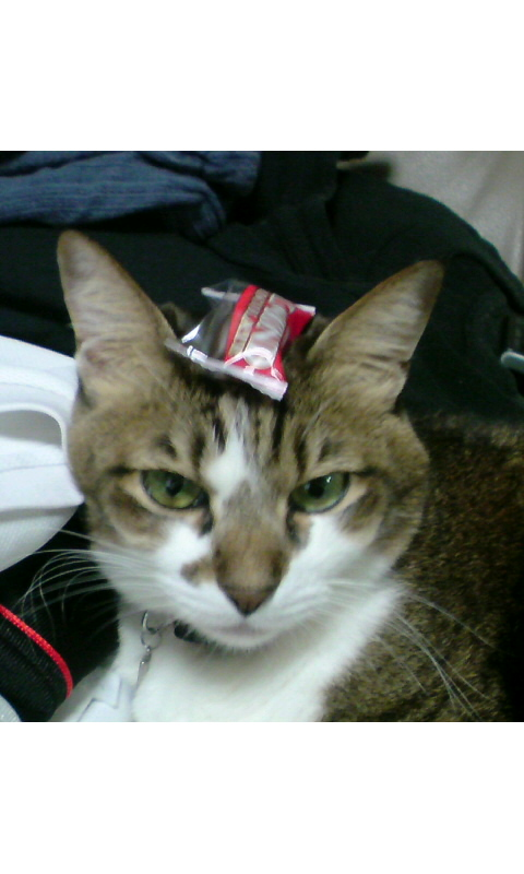チョコ帽子??
